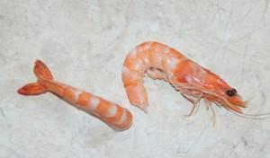crevetten-deco